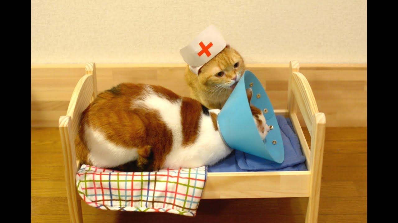 Youtube Maru The Cat Videos