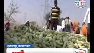 #Agrowon: Cucumber Farming in Tuljapur