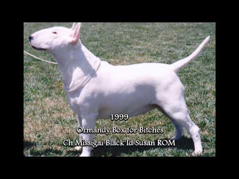 Australian Bull Terrier Trophy Show Winners 1979 - 2015