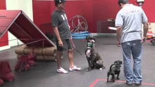 Well Mannered Dog Training Tips With Remote Collar - Dog Training: Episode 3 | Sitmeanssit.com