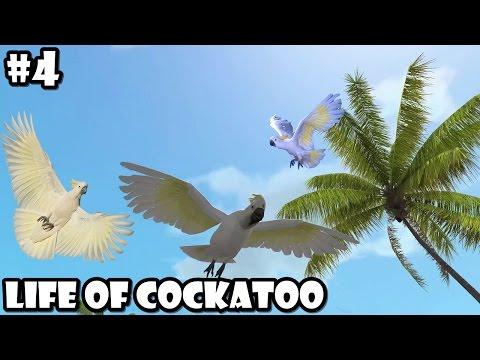 Ultimate Bird Simulator - Life of Cockatoo - Android/iOS - Gameplay Part 4