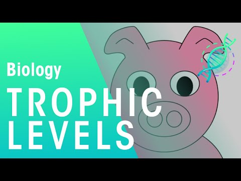 What Are Trophic Levels? | Ecology & Environment | Biology | FuseSchool