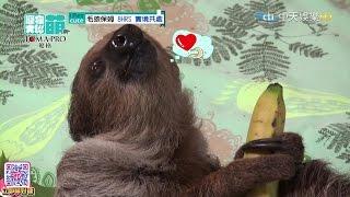 2016 05 22 寵物大聯萌 完整版 樹 懶 本 尊 來 了
