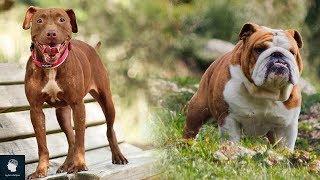 7 كلاب محظورة حول العالم..!!