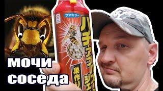 Японские шершни-убийцы твои соседи— Видео о Японии от Пан Гайджин