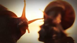 Улитки Ахатины [Achatina fulica]