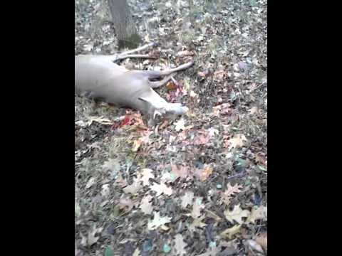 Deer 'Fakes' Dead, Scares Living Sh*t Out Of Hunter (VIDEO)