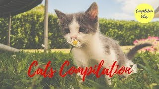 Super Funny Cats compilation video 🔴 Cute lovely kittens