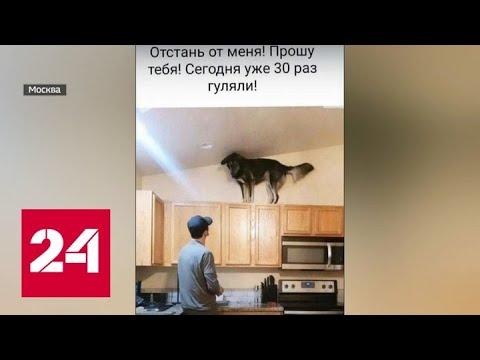 Бизнес на питомцах: россияне сдают собак в аренду для прогулок - Россия 24