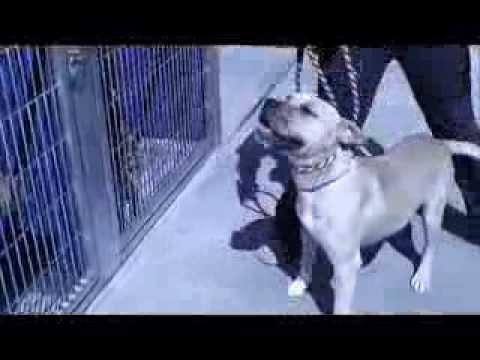 Murphy at Long Beach (CA) Shelter (ID # A503759)