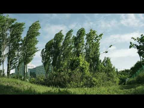 Still Life - Trees 02