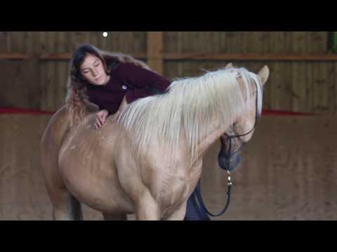 1 Monat mit Spirit // Bald ein Reitpferd? // MUSTANG MAKEOVER 2018