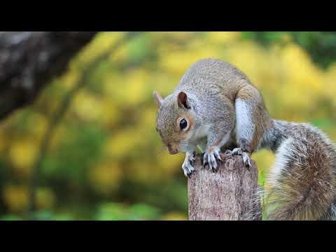 Save Nature & Love Nature