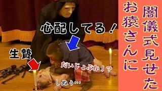 【ドッキリ】ワンちゃんに呪いをかけるフリをしたら…お猿さんの行動が泣ける…!!