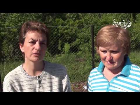 видео: Кустарники для сада. Зимостойкие виды и сорта. Сайт