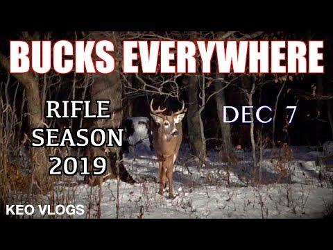 BUCKS Everywhere! (Rifle Hunting 2019)