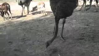mix farm of deer and ostrich