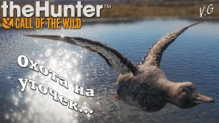 Поиск уток, погоняли на квадриках.. theHunter Call of the Wild