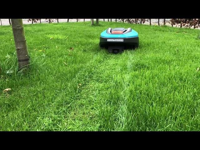 Robotmaaier in actie in lang gras. Kan dit? Jazeker!