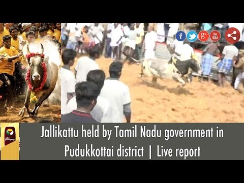 Jallikattu held by Tamil Nadu government in Pudukkottai district | Live report