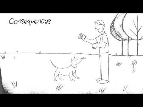 How Dogs Learn Animation Education