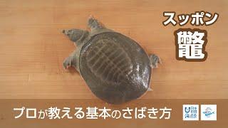 鼈(すっぽん)のさばき方 - How to filet Soft-shelled Turtle -|日本さばけるプロジェクト