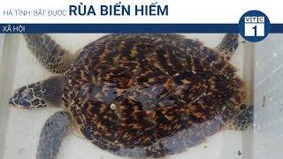 Hà Tĩnh: Bắt được rùa biển hiếm | VTC1