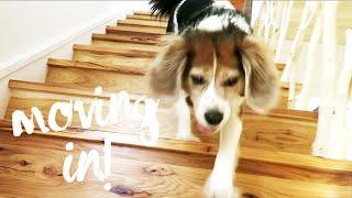 Molly Moves In thumbnail