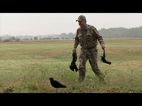 Arkansas Crow Hunt