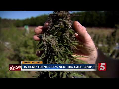Hemp may be next big legal cash crop in Tennessee
