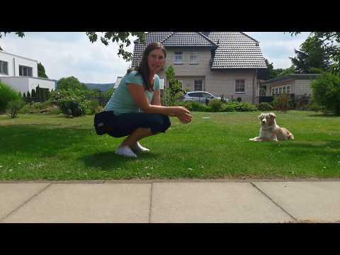 Anleitung: Distanzkontrolle mit Hund/ Hund lernt Kommandos auf Entfernung