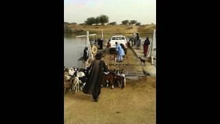 On voyage toujours avec la bétail au Fouta.