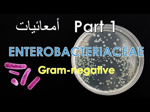 Enterobacteriaceae (Gram-negative) Salmonella, Escherichia coli - Part 1