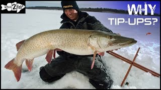 How to Catch Fish With Tip-Ups - Multispecies Action!