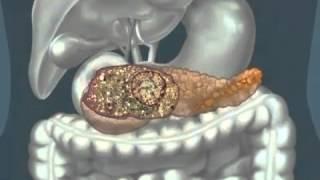 Клетка, ядро, функции белка