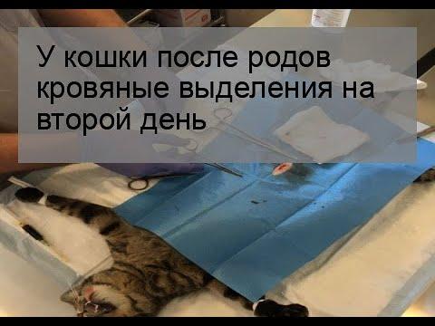 У кошки после родов кровяные выделения на второй день