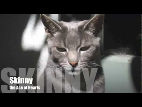 Trailer do filme Skinny and Cat