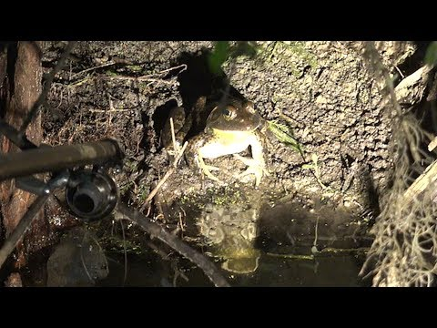 Blow Gunning Rattle Snakes And Monster Swamp Frogs