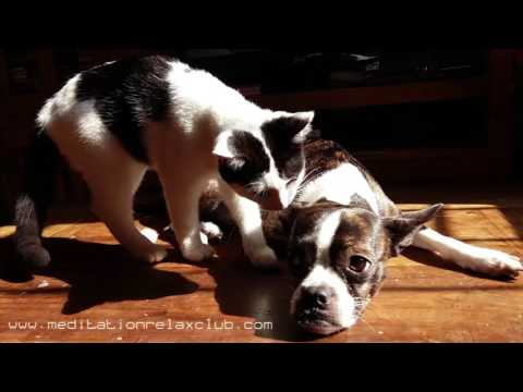 Fall Asleep Music for Pets: 3 HOURS Soothing Music Therapy for Dogs and Cats