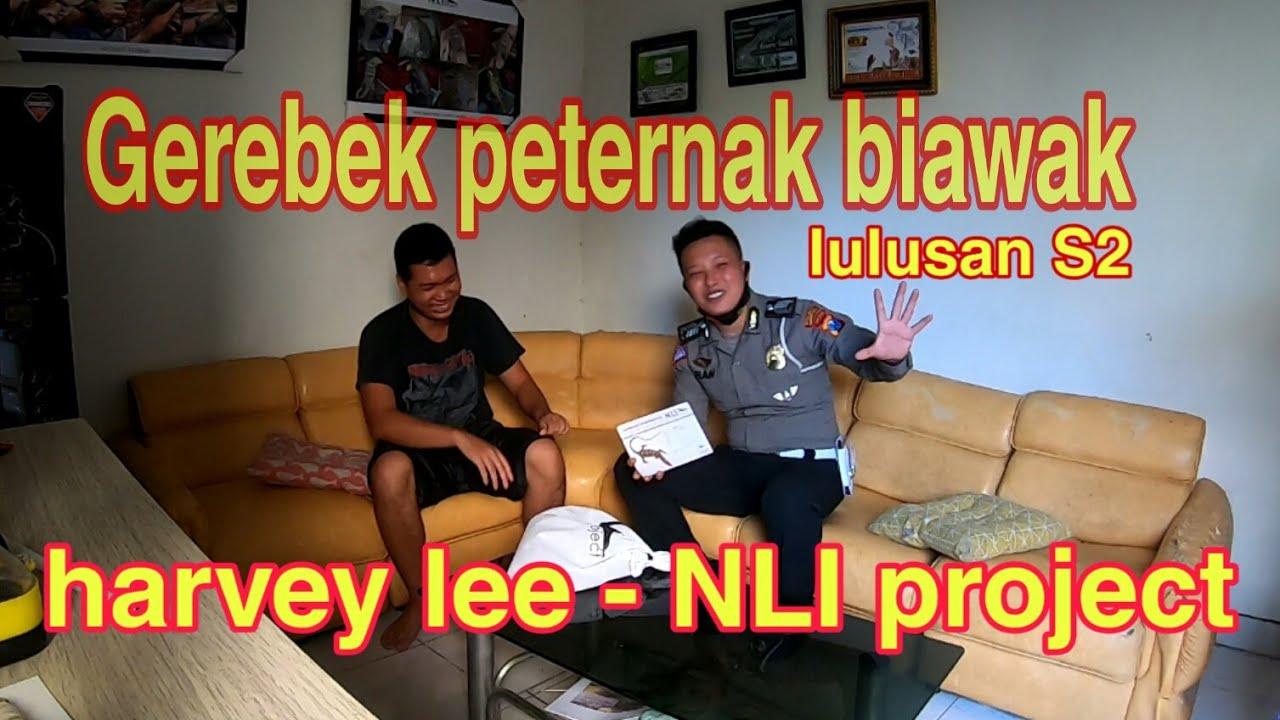 Download GEREBEK PETERNAK BIAWAK - HARVEY LEE - NLI PROJECT