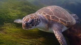 Sea Turtles in La Jolla, California!!!