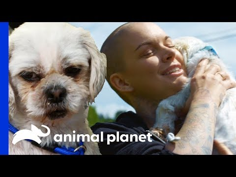 From Puppy Mill Breeding Dog To Beloved Pet! | Amanda To The Rescue