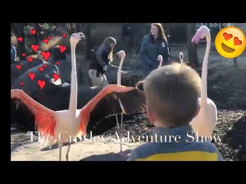 The Crosley Adventure Show goes to the Cincinnati Zoo