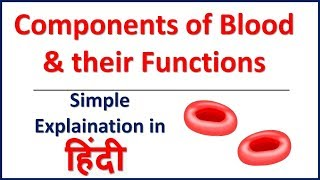 The Components of Blood and Their Functions | Bhushan Science