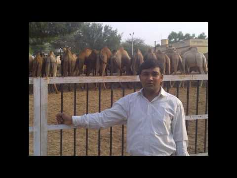 Bikaner Trip with office colligue