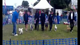 Drum and Bass Dog Show