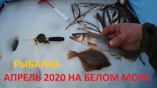 Рыбалка в апреле на Белом море Корюх Камбала сухое море железные ворота
