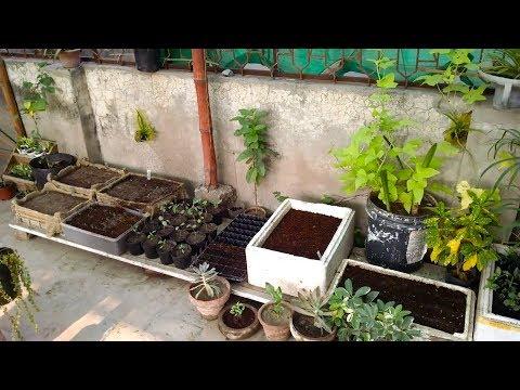 Vegetables Garden Weekly Overview Good Vegetables To Grow Urdu