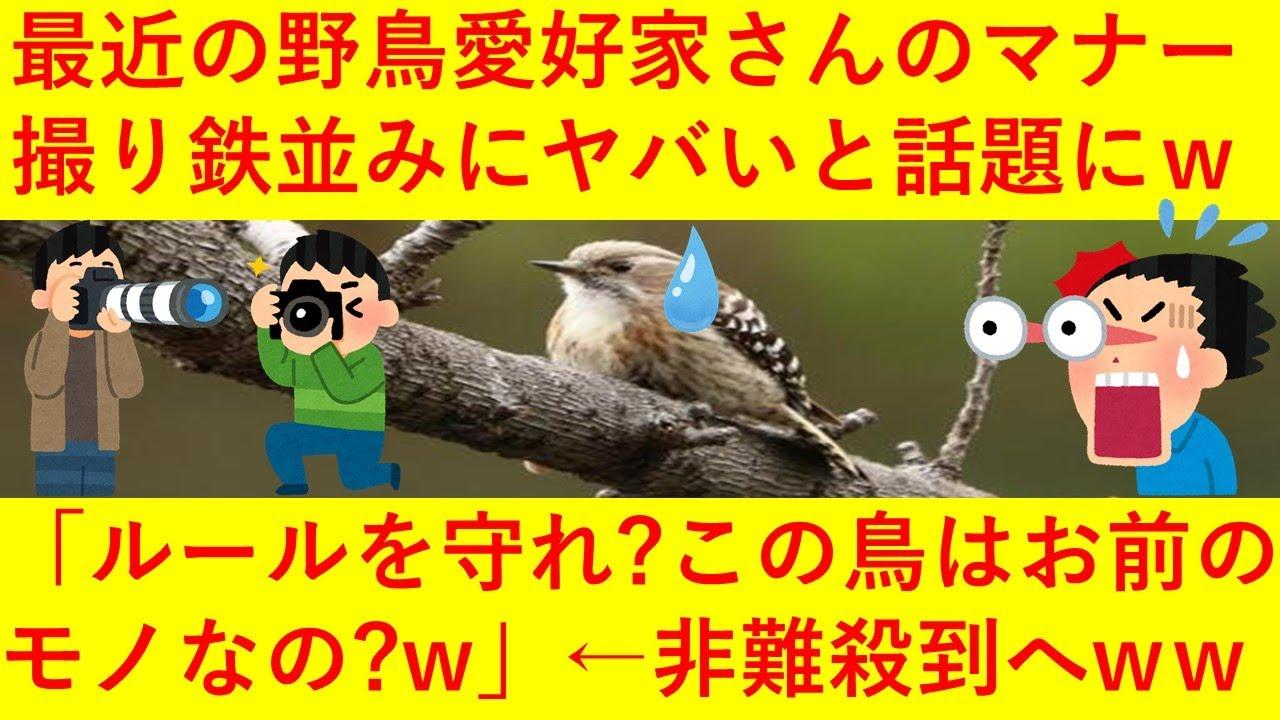 【悲報】最近の野鳥愛好家さん、撮り鉄並みにマナーがヤバ過ぎることが判明へ!!「構図をパクられないよう、撮影後に鳥の巣は破壊しますww」「は?ルールを守れ?この鳥はお前のものなの?ww」←wwwwww