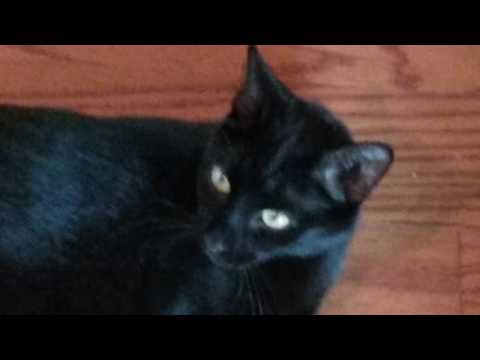 Funny cute cat does a death stare!